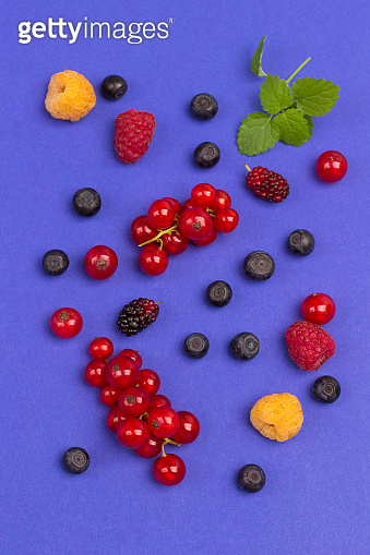 Still life of multi-colored berries on purple background. Red currants, raspberries red and yellow, blueberries, green mint