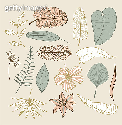 Tropical exotic palm leaves collection. Hand drawn palm leaves with contour In soothing pastel colors. Set of isolated on a beige background for fabric, textile, T-shirts and wallpaper.