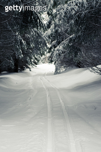 winter atmosphere in forest