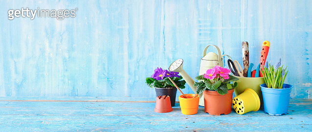 hyacinth and primula flowers, gardening equipment on wooden table. Gardening in the Springtime, panorama format with good copy space