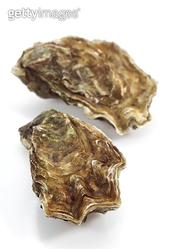 French Marennes by Oleron Oysters, ostrea edulis against White Background
