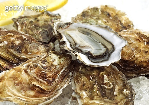 French Marennes by Oleron Oysters, ostrea edulis on Ice