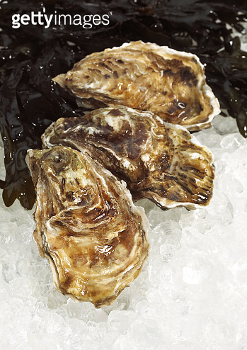 FRENCH OYSTER MARENNES D'OLERON ostrea edulis ON ICE