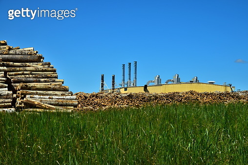 Paper Mill Wood Pile