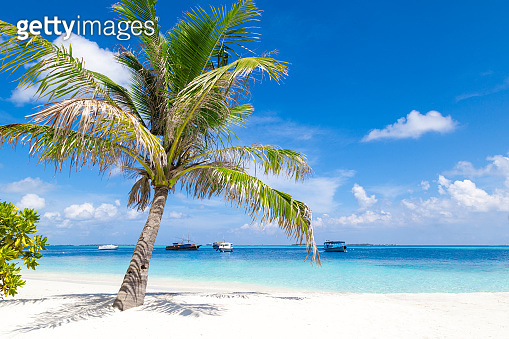 Beautiful tropical landscape with palm tree