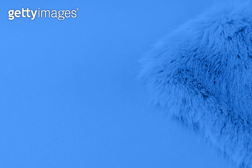Classic blue faux fur background flat lay