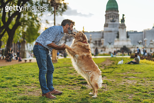 Mature man with golden retriever dog walking in the park in sunset