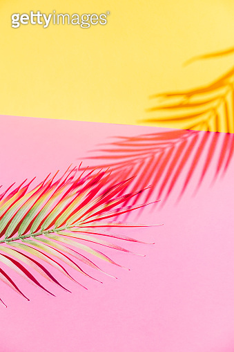 Tropical palm leaves branches and shadow over pink and yellow paper background. Summer theme concept