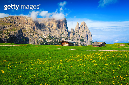 Summer touristic resort with yellow dandelion flowers, Dolomites, Italy