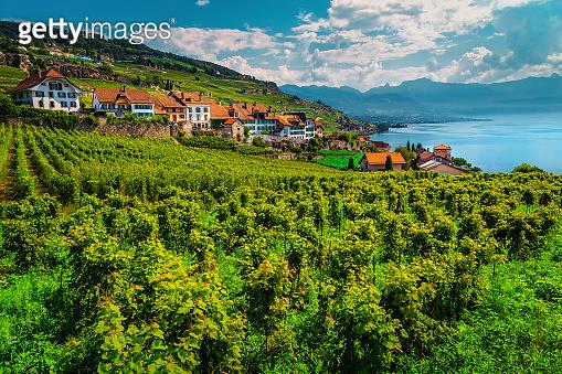 Spectacular vineyards in Lavaux region near Chexbres village, Vaud, Switzerland