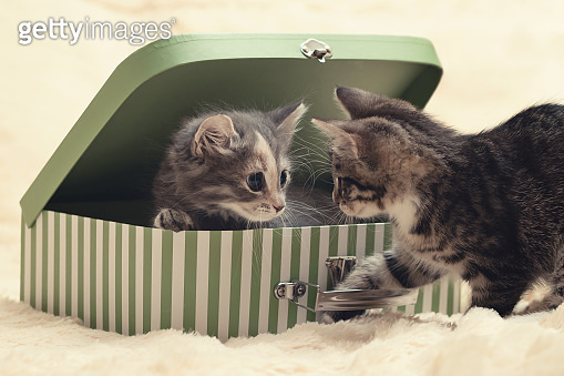 Two cute kittens play with a gift box in the form of a small suitcase on a cream fur blanket