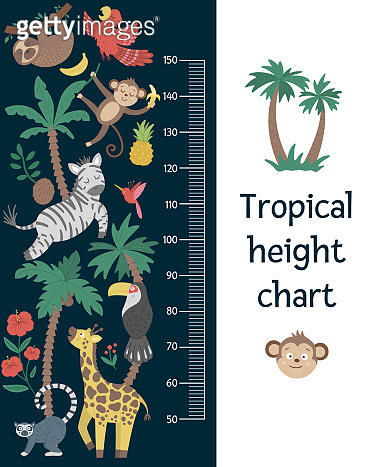 Vector cute height chart with exotic animals, birds, palm trees, leaves, flowers, fruits. Funny wall decoration with tropical monkey, zebra, lemur and plants. Jungle summer meter poster for kids