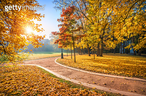 Trees with golden and red leaves in Tsaritsyno park