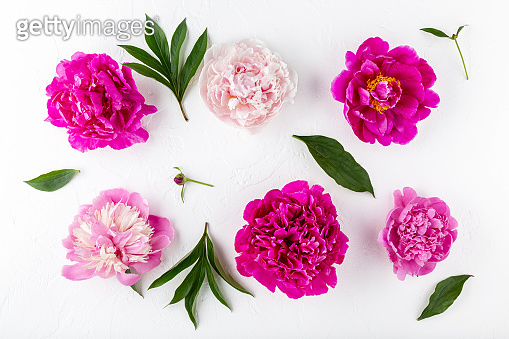 Peony flower heads with leaves scattered on a white background. Close up, top view, flat lay.