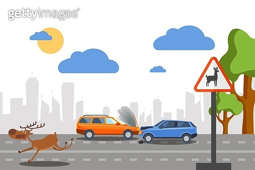 Wild deer accident on road vectore illustration. Cars collide near sign warning movement forest animals. Frightened deer run