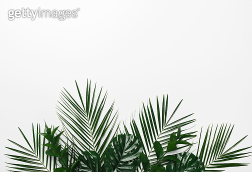 Green palm and monstera leaves isolated on white