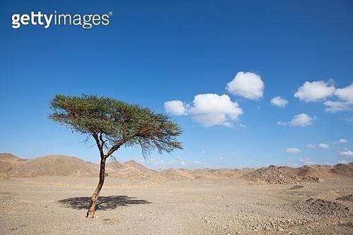 Egyptian landscapes