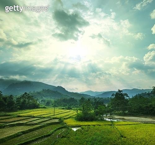 Fields in Laos