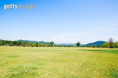 공원, 환경, 나무, 들판, 잔디밭 (경작지)