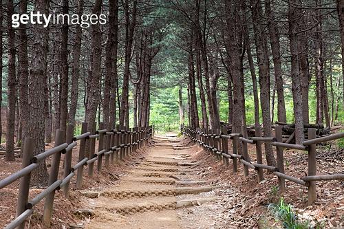 산, 풍경 (컨셉), 숲, 길, 산책길 (보행로), 산림욕, 침엽수 (상록수)
