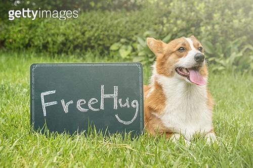 강아지, 웰시코기 (순종개), 라이프스타일