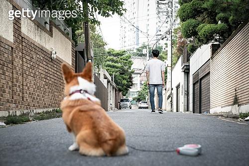 강아지, 웰시코기 (순종개), 유기동물