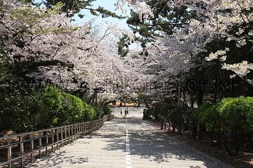 제황산공원