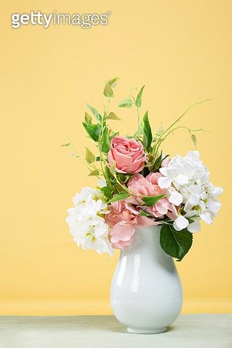 꽃, 식물, 장미