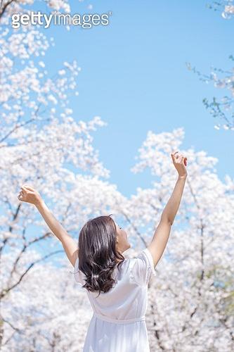 여성, 봄, 벚꽃, 벚나무 (과수), 교외전경 (Setting), 여행, 팔들기 (제스처), 뒷모습, 팔벌리기 (제스처)
