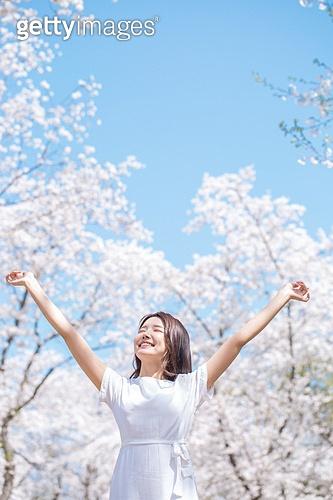 여성, 봄, 벚꽃, 벚나무 (과수), 교외전경 (Setting), 여행, 팔들기, 미소
