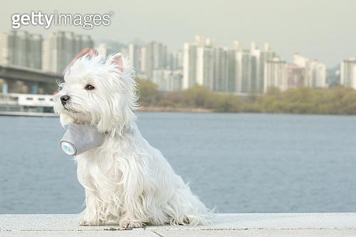 대기오염 (공해), 마스크 (방호용품), 애완견 (개)