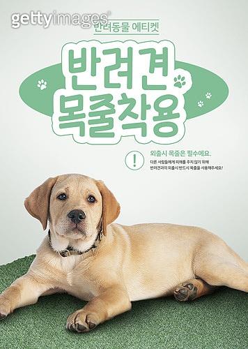 그래픽이미지, 이벤트페이지, 반려동물 (길든동물), 강아지, 펫티켓 (예절), 강아지 (새끼), 골든리트리버