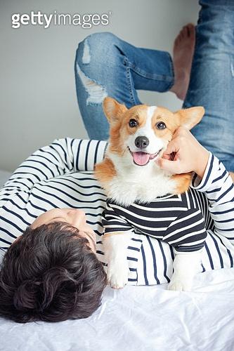 개 (개과), 반려동물, 애완견, 웰시코기 (순종개)
