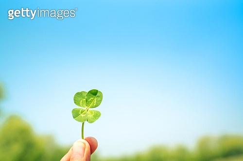 환경, 행운, 심볼 (인조물건), 네잎클로버 (클로버), 희망