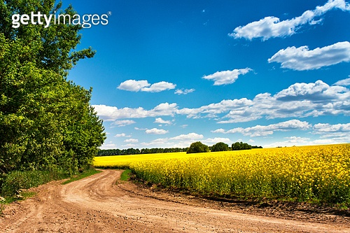 Dirt road in rapeseed flowering field, beautiful spring countryside, sunny day. Yellow flowering fields, ground road and beautiful valley, nature rural spring landscape