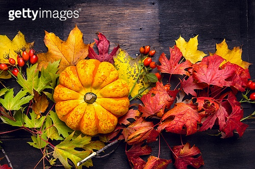 Beautiful pumpkin on colorful autumn leaves, dark wooden background, top view