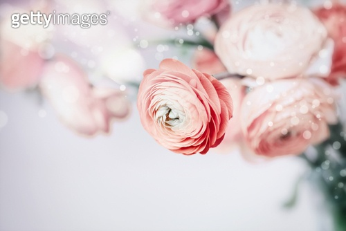 Pastel floral background with pretty flowers