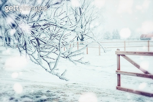 Winter day country landscape with frozen tress , snow and wooden fence, outdoor nature background