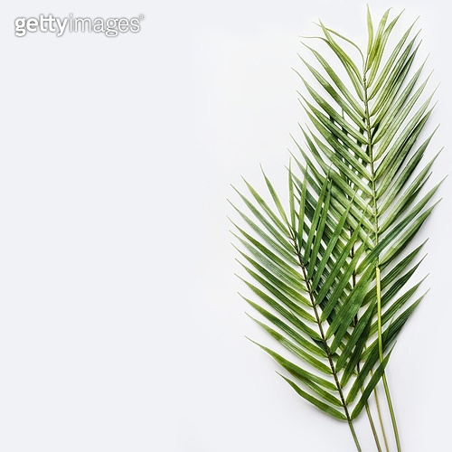 Two palm leaves on white table background, top view, place for text, mock up