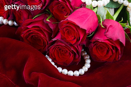 bunch of  fresh red rose flowers on soft silk velvet background. red rose on velvet