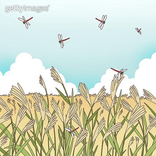일러스트, 가을, 전통축제 (홀리데이), 풍경 (컨셉), 갈대 (식물)