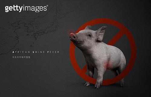 아프리카돼지열병, 돼지 (발굽포유류), 질병, 바이러스