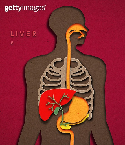 종이 (재료), 페이퍼아트, 몸 (인간의특성), 실루엣, 소화기관 (Body Part), 간 (인체내부기관), 흉곽 (사람뼈)