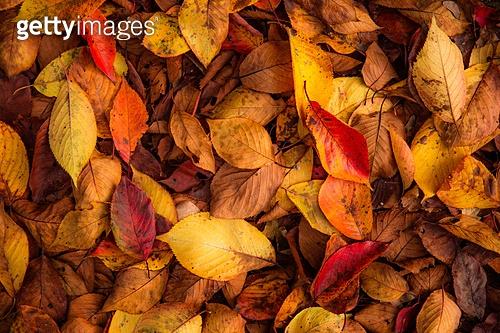 가을, 가을 (계절), 계절, 감성, 백그라운드, 낙엽, 단풍철 (가을), 단풍잎 (잎), 11월