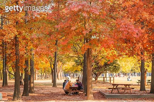 가을, 가을 (계절), 계절, 단풍나무 (낙엽수), 단풍철 (가을), 단풍잎 (잎), 자연 (주제), 낙엽관목, 낙엽, 공원