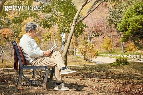 노인 (성인), 가을, 휴식, 공원벤치, 독서