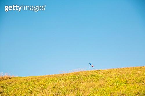자유, 맑은하늘 (하늘), 풀 (식물), 잔디밭 (경작지)