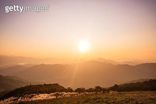 자연 (주제), 산, 자연풍경, 산림, 가을, 가을 (계절), 갈대, 팜파스 (Ornamental Grass), 일몰 (땅거미)