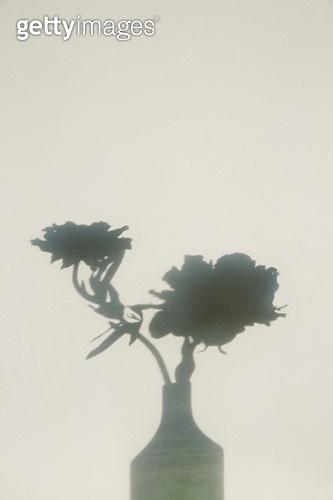 실내, 백그라운드, 햇빛 (빛효과), 뜨거움 (컨셉), 인테리어, 벽 (건물특징), 식물, 꽃, 꽃병 (용기), 그림자