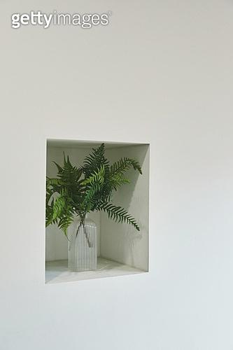빔 (상태), 빛 (자연현상), 백그라운드, 햇빛, 뜨거움, 인테리어, 식물, 벽 (건물특징), 꽃병